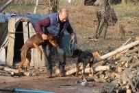 AV KÖPEĞİ - Sahibinin Çalındığını İddia Ettiği Köpek Jandarma Tarafından Bulundu
