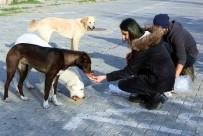 BILGISAYAR PROGRAMCıLıĞı - Sokak Hayvanları İçin Örnek Proje