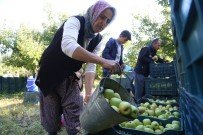 Isparta'da Elma Piyasası Hareketlendi