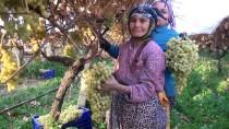 SOĞUK HAVA DEPOSU - Kış Mevsiminde Üzüm Hasadı