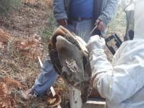 (Özel) Bal Avcıları İş Başında