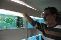 PET SHOP - Süs Balığı Bakımında Bu Uygulamalara Dikkat