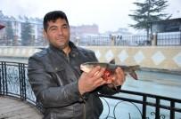 ALABALIK - Ceyhan Nehri'nde Toplu Balık Ölümleri Yaşandı