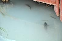 ALABALIK - Ceyhan Nehri'nde Toplu Balık Ölümleri
