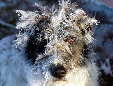 Doğu'da en soğuk hava Ardahan ve Kars'ta görüldü