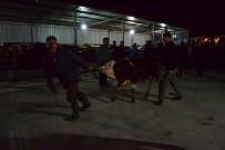 BÜLENT KORKMAZ - Genç Çiftçilere 210 Adet Büyükbaş Hayvan Dağıtıldı