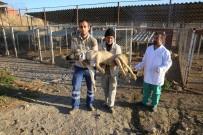 SOKAK KÖPEĞİ - Köpekler Sağlık İçin İstanbul'a Taşındı