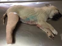 YAVRU KÖPEK - Kazada Yaralanan Köpek Tedavi Altına Alındı