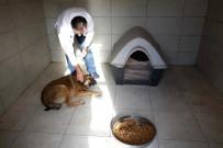 OTOBÜS DURAĞI - Küçükçekmece Veteriner Hekimleri Hasta Sokak Köpeğine Sahip Çıktı