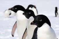 OKYANUS - 14 Bin Yıldır Antartika'dalar