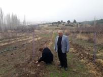 BADEMLI - Eğirdir Köylerinde Alternatif Tarım