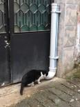 HAYVANLARI KORUMA DERNEĞİ - Trabzon'da Hayvanlar İçin Yemleme İstasyonları Kuruluyor