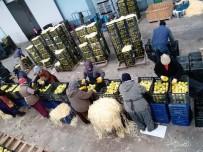 SOĞUK HAVA DEPOSU - Elma Rekoltesi Az Olunca, Fiyatlar Yüz Güldürüyor