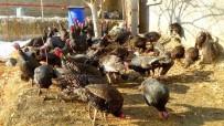 Serkan Kaya - Hakkari'de Yılbaşı Hindileri Satışa Çıktı