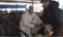 TRAKYA BÖLGESİ - Kırklareli'de Şap Hastalığı Aşılama Çalışmaları