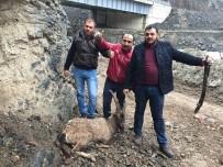 ARTVİN BELEDİYESİ - Yaralı Dağ Keçisini Kurtarma Mücadelesi