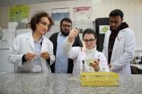 YANIK TEDAVİSİ - Bakterilerle Doğayı Koruyacaklar