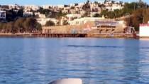 BODRUM KALESI - Bodrum'da Akdeniz Foku Şaşırttı