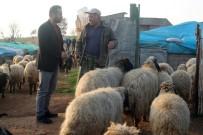 Cumhurbaşkanı Erdoğan'ın Müjdesi Hayvancıları Sevindirdi