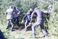 ÇAM AĞACI - İstanbul'da Yılbaşı Öncesi Kaçak Çam Ağacı Operasyonu