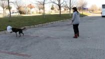 EVCİL HAYVAN - 'Karakız' Protez Bacağa Kavuştu