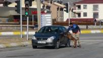 HALITPAŞA - 82 Yaşındaki Otomobil Sürücüsü Paniğe Neden Oldu