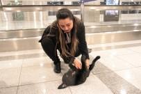YAVRU KÖPEK - Atatürk Havalimanı'nda Unutulan Yavru Köpek, Çalışanların Maskotu Oldu