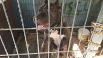 PETSHOP - Çorum'da Köpeğe Cinsel İstismara Bin 638 TL Para Cezası
