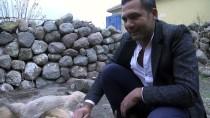 KARKıN - Dağa Bırakılan Yavru Köpeklerin Koruyucusu Oldu