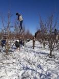 Isparta'da Altındaki Elma Ağaçları Budanıyor