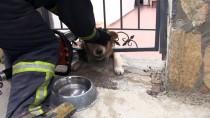 GÜMBET - Muğla'da Başı Demir Korkuluklara Sıkışan Köpek Kurtarıldı