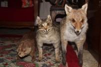 Nesli Tükenen Hayvanları Gelecek Nesillere Tanıtmak İçin...