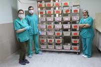 TÜRKIYE BILIMLER AKADEMISI - 'Perga' Bilimsel Çalışma İle Kapsüle Dönüştü