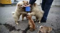 YAVRU KÖPEKLER - Polisin İyileştirdiği Yavru Köpekler Yeni Yılda Sahiplendirilecek