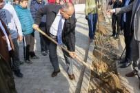 ÇINAR AĞACI - Yahyalı'da 'Ecdad Mirası Çınarlar' Toprakla Buluşuyor