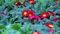 Belediyelere 'Yerli Süs Bitkisi Kullanın' Çağrısı