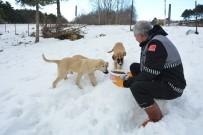 SOKAK HAYVANI - Karda Aç Kalan Sokak Hayvanlarına Şefkat Eli