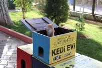 GAZİANTEP HAYVANAT BAHÇESİ - (Özel) Oy Sandıkları Sahipsiz Kedilere Yuva Oldu