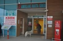 SIBIRYA - Sadık Köpek Acil Kapısında Sahibini Böyle Bekledi