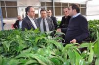 YERLİ TOHUM - Tümer Açıklaması 'Yerli Tohum Desteklenmiyor'