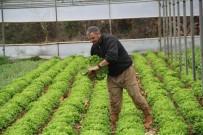 Türkiye'nin Kış Sebzeleri Isparta Sütçüler'den