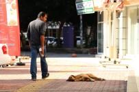 Antalya'da 2017 Yılında 9 Bin 289 Kişi Kuduz Riskli Temas Nedeniyle Başvuru Yaptı