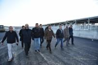 HAYVAN PAZARI - Başkan Külcü Hayvan Pazarını İnceledi
