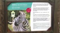 DEVE KUŞU - İzmir Doğal Yaşam Parkı'nda Yavru Zebra Sevinci