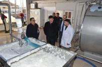 FARUK GÜNAY - Vali Arslantaş, Erzincan Süt Toplama Soğutma Ve Süt Analiz Merkezi'ni İnceledi
