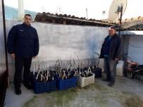 ULUPıNAR - Meyve Yetiştiricilerine Büyükşehirden Fidan Desteği