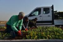 HERCAI - 1 Milyon 500 Bin Kışlık Mevsimlik Çiçek Dikiliyor