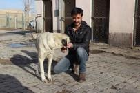 SOKAK KÖPEĞİ - İşkenceye Uğrayan Köpek Hayata Döndü