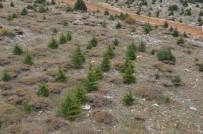 EROZYON - Mersin'de 14 Yılda 307 Milyon Fidan Toprakla Buluştu