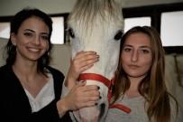 KIZ ÖĞRENCİLER - Üniversiteli Kızlar, Ojeli Ellerle Atlara Nal Çakıyor